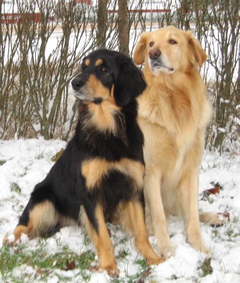 Capri ja Sasu jouluna 2007