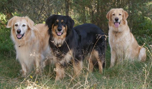 Omat koiramme Nella, Abba ja Sissi syyskuussa 2009