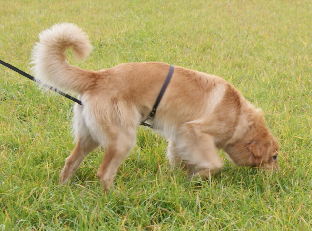 Repe 15 months old