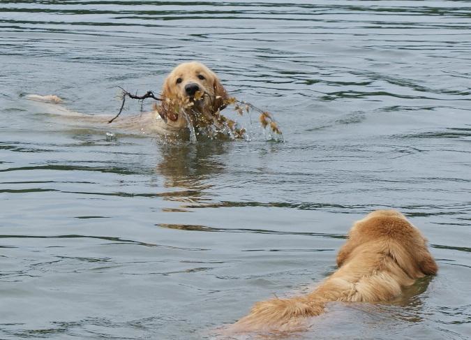Repe 1 v is swinning and Sissi swims towards