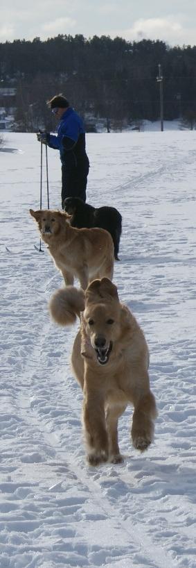 koko lauma hiihtolenkille lähdössä helmikuussa 2011