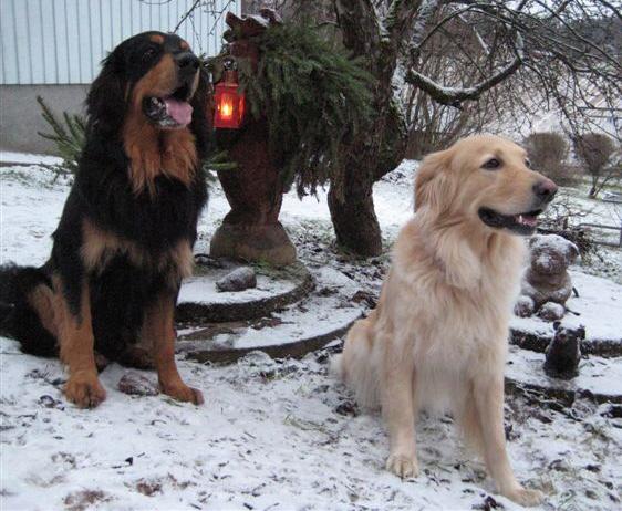 Otto, Kylli ja karhut