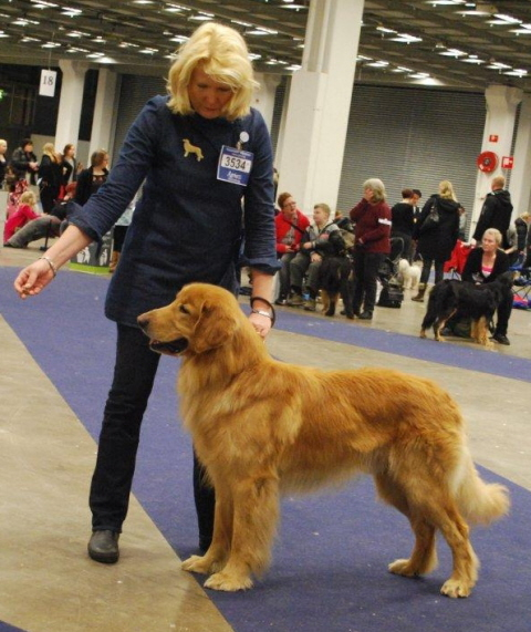Repe is very easy to handle in ring :-)  photo: Patricia Johansson